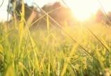 В Череповец вернётся летняя погода