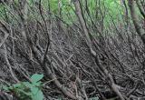 Череповчан-собственников земельных участков оштрафовали за сорняки и кустарники