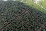 Череповчане послали Путину видео с просьбой защитить Пуловский лес