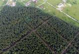 Пуловский лес больше рубить не будут