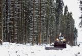 Суд поставил точку в Пуловском лесу?