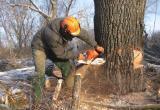 Череповчанка в резкой форме пожаловалась губернатору на вырубку деревьев в Череповце