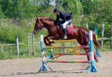 Череповецкие конники успешно выступили на Чемпионате и первенстве области