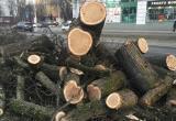 В Череповце на старые деревья потратят 4,2 млн. рублей